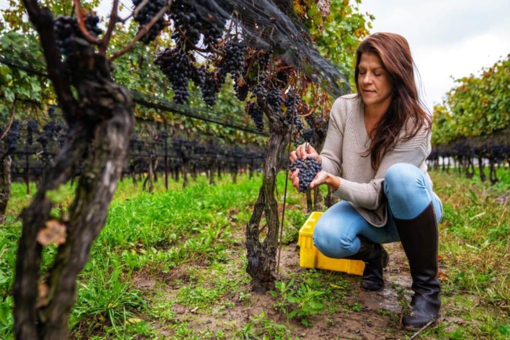 Lydia Tomek, Ravine Vineyards, Ontario International Women's Day 2021