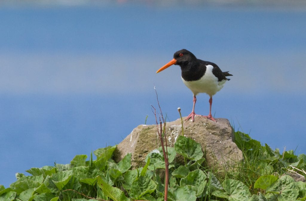 Thriving Wildlife in The Islands of Guernsey