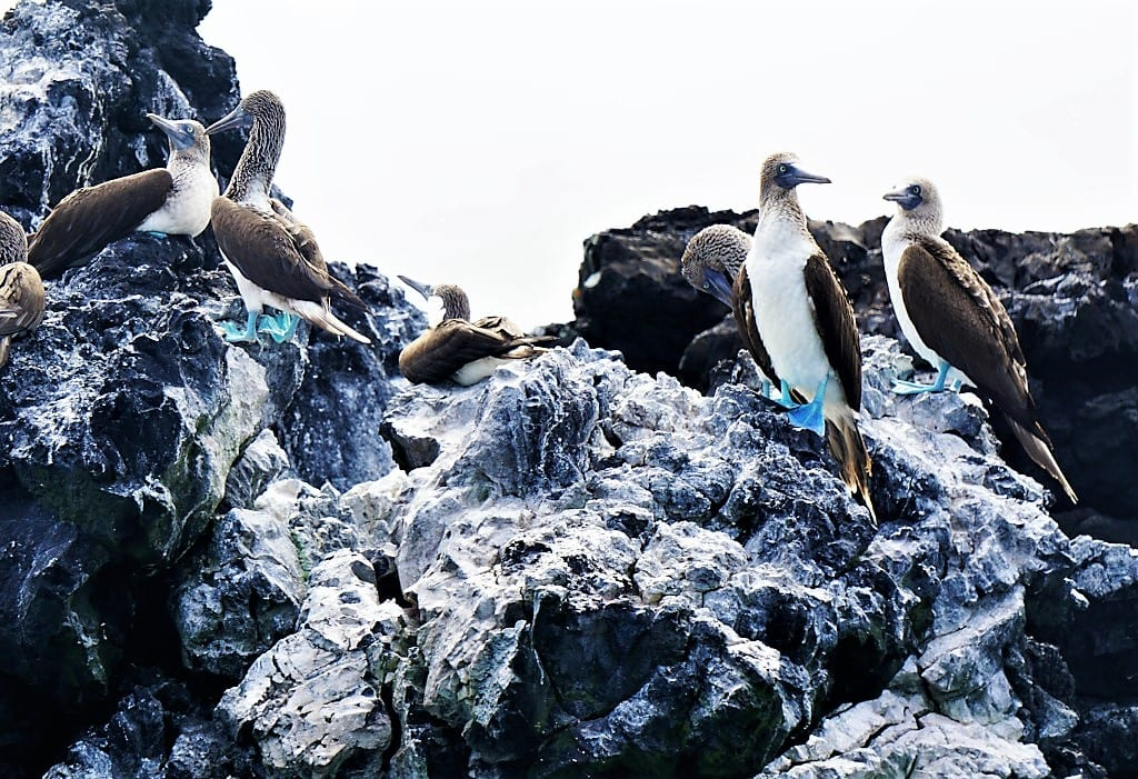World Wildlife Day Riviera Nayarit, Blue Footed Booby