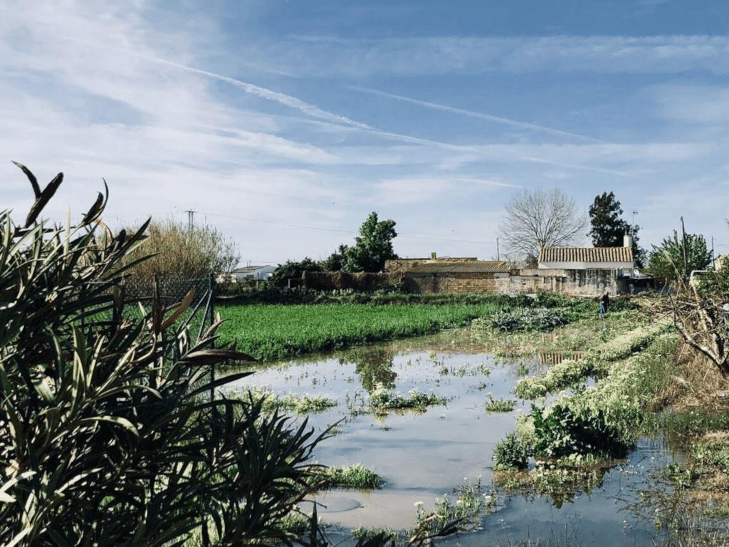 Local Farm in Delta del Ebro Natural Park, Spain