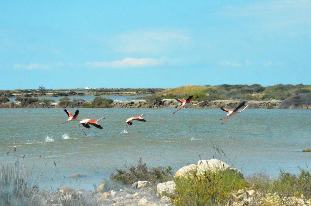 Mediterranean Natural Parks with MEET