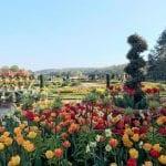 Trentham Gardens Spring Bulb Festival