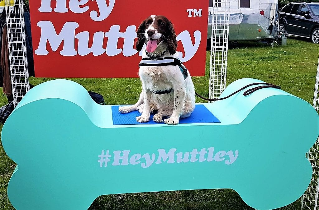 Dogstival, Burley Park, New Forest