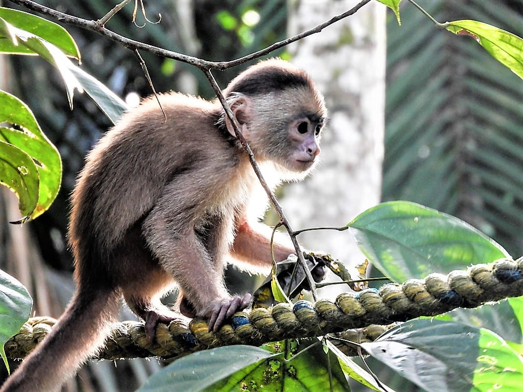 Colombia is one of the most bio-diverse countries