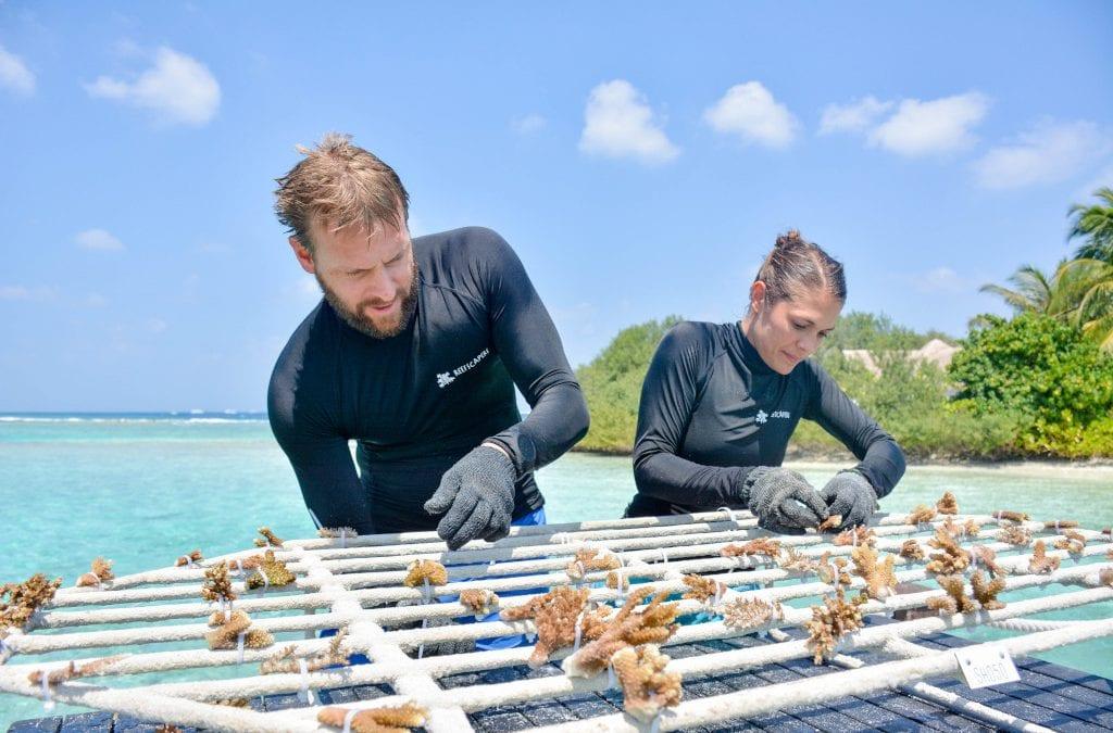 Adopt a Coral at Sheraton Maldives