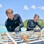 Adopt a Coral at Sheraton Maldives