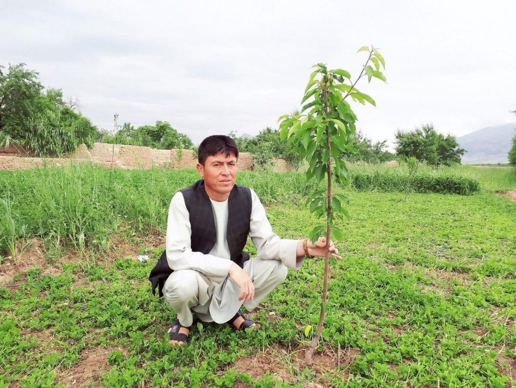 Afghan tree planting