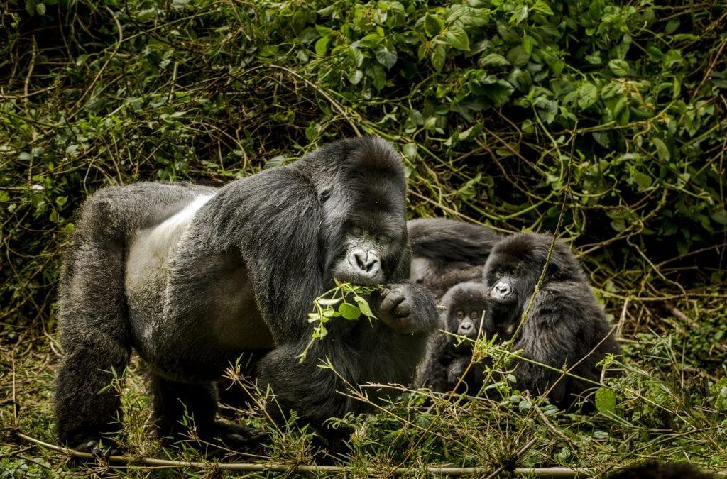 Rwanda Travel: Community at Heart of Tourism