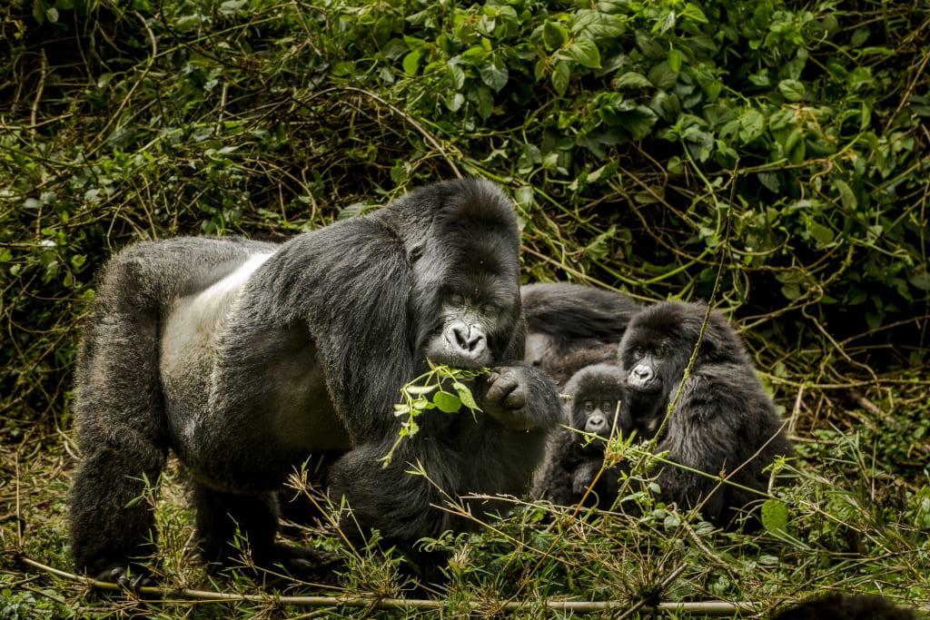 Rwanda travel Gorillas