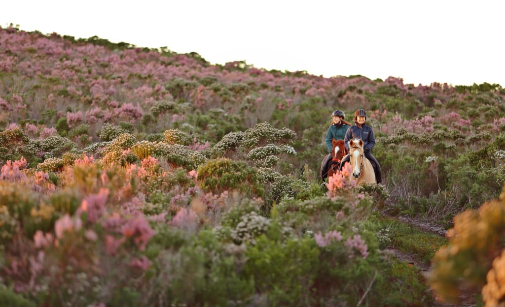Grootbos South Africa