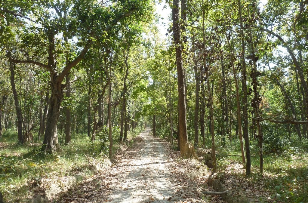 The Mountain Company Nepal Tree Planting