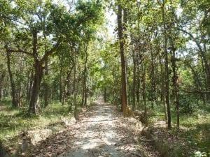 Nepal Tree Planting