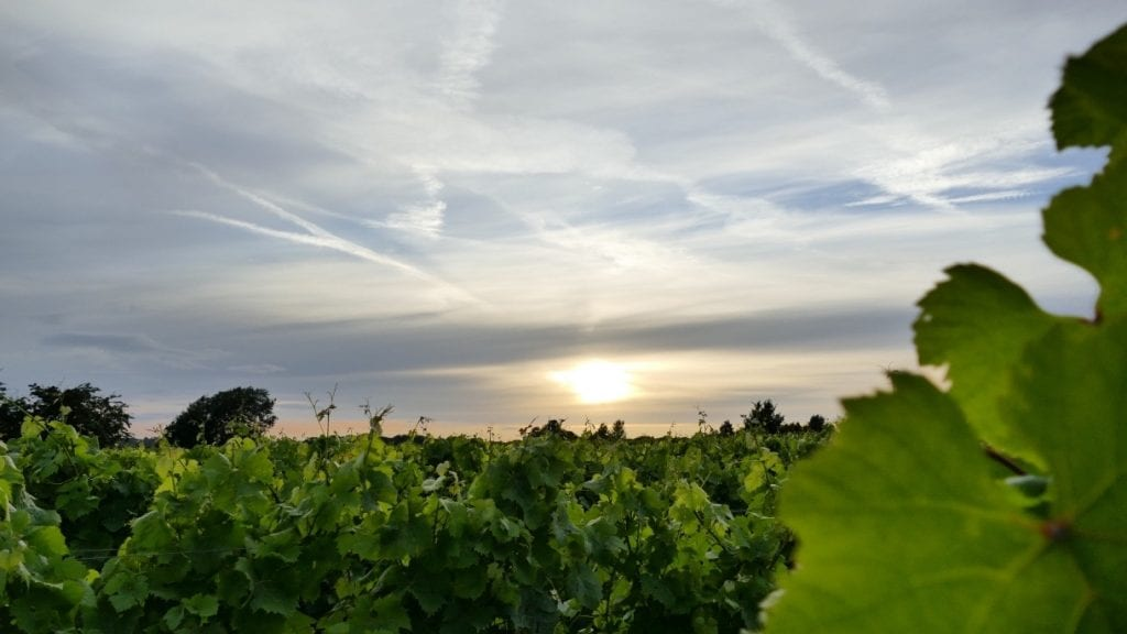Yorkshire wine trail
