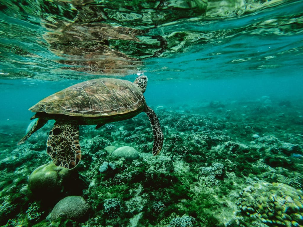 Explore the wold underwater around the islands of the Phillipines
