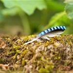 benefits of Forest Bathing - Feathers pure Helena Skoog