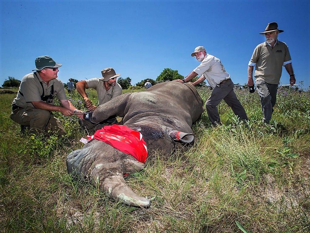 Poaching African Wildlife