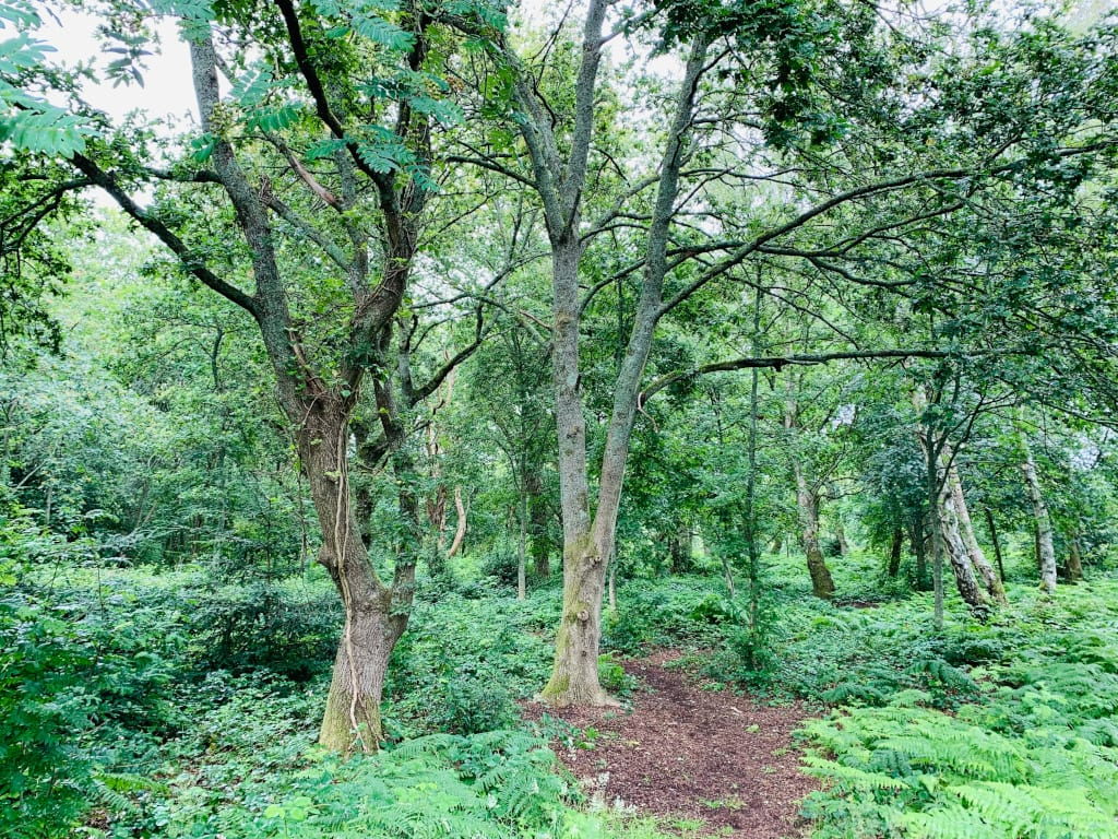 Hampshire woodlands photo Irene Caswell