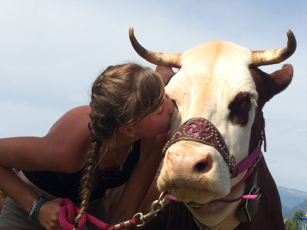 Even the cows are friendly in Isère