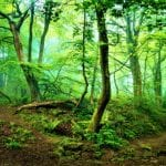 Luxtripper, Trees4Travel Partner to Carbon Offset