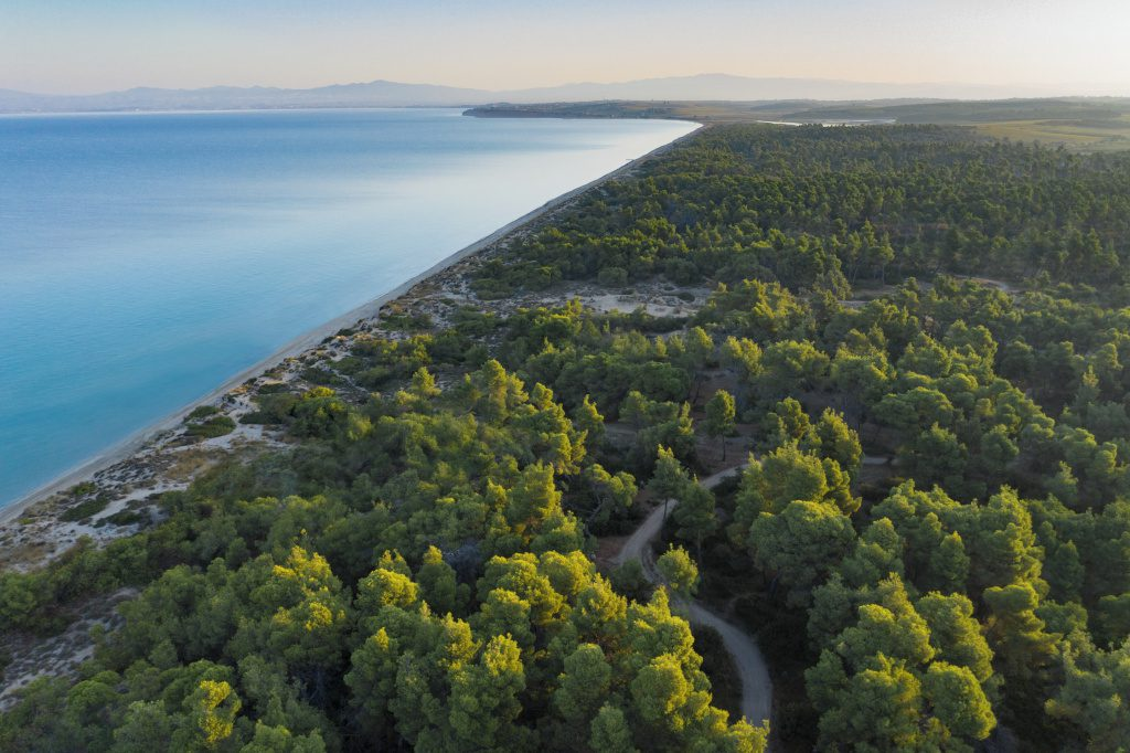 Sani Resort Bousoulas Beach Forest