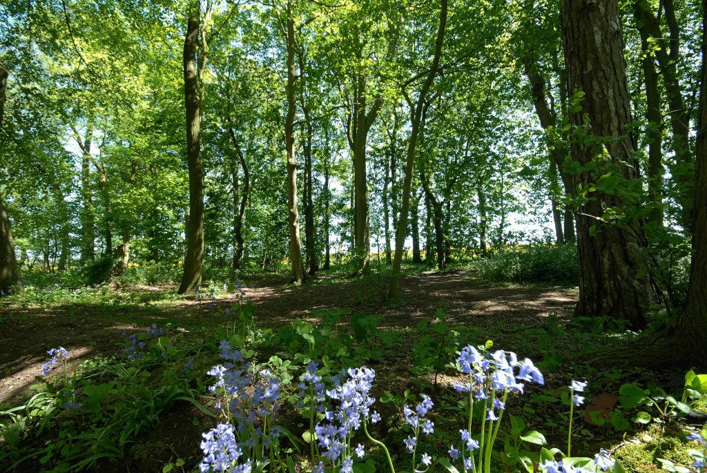 Woldgate Woods East Yorkshire