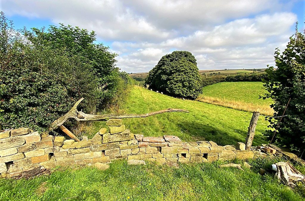Along the Hockney Trail in the Yorkshire Wolds